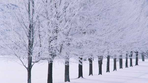 trees, number, hoarfrost