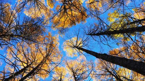 trees, sky, view from below
