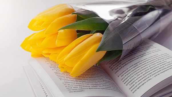 tulips, book, flowers