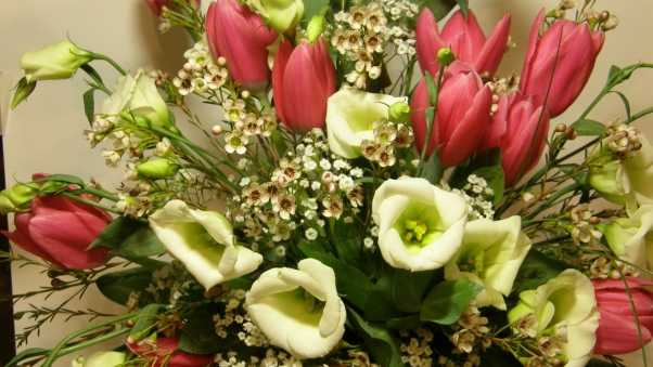 tulips, flowers, bouquets