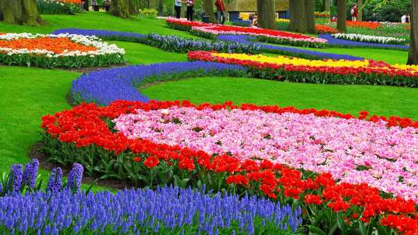 tulips, hyacinth, muscari