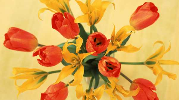 tulips, lilies, flowers