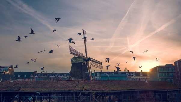 windmill, birds, buildings