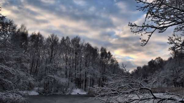 winter, forest, lake