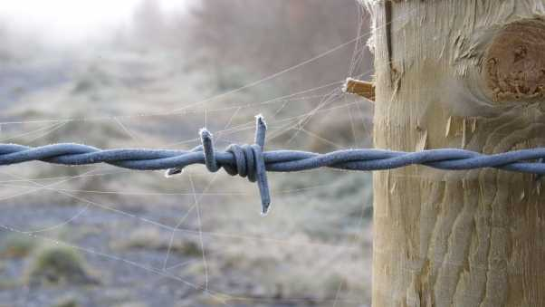 wire, web, log