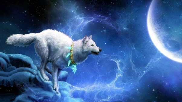 wolf, arrivals, moon