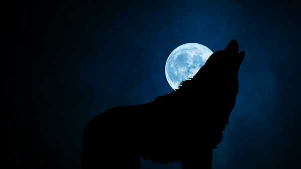 wolf, silhouette, moon