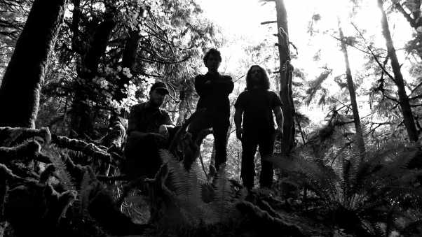 wolves in the throne room, forest, trees